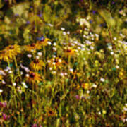 New York Wildflowers Xxvi Poster