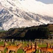 New Zealand Deer 3497 Poster