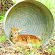 Newborn Fawn Finds Shelter In An Old Washtub Poster
