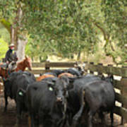 Nick Loading Cattle Poster