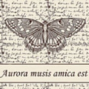 Night Butterfly On Old Letter Poster