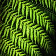 Night Forest Frond Poster