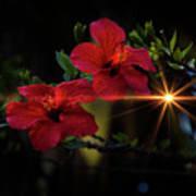 Night Hibiscus Poster