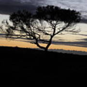 Night Tree Poster