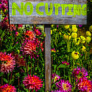 No Cutting Sign In Garden Poster