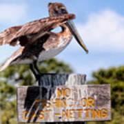 No Fishing Baby Pelican Poster