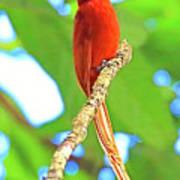 No Name Bird Poster