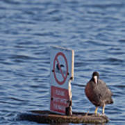 No Swimming Poster