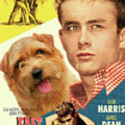 Norfolk Terrier Art Canvas Print - East Of Eden Movie Poster Poster