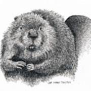 North American Beaver Poster
