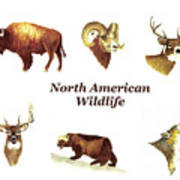 North American Wildlife Poster
