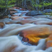 North Branch Rapid In Spring  Poster