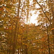 North Carolina Woods Poster