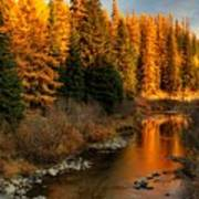 North Fork Yaak River Fall Colors #1 Poster