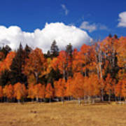 North Rim Autumn Poster