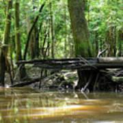 North West Florida Swamp Poster