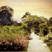 Nostalgia Of Roses Poster