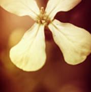 Nostalgic Wildflowers Poster