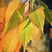 November Colors Poster