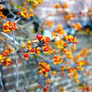 November Garden Wall Poster