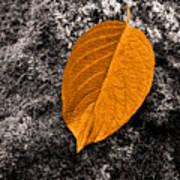 November Leaf Poster
