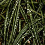 November Raindrops On Grass #1 Poster