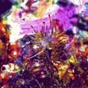 Nudibranch Flabellina Slug Seaslug  Poster