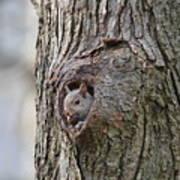 Nutty Squirrel Surprise  Poster