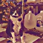 Nyc Bodega Cat Poster