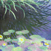 Nympheas Avec Reflets De Hautes Herbes Poster