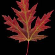 Autmn Leaf Poster