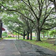 Oak Lined Drive Poster