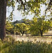 Oak Meadow Poster