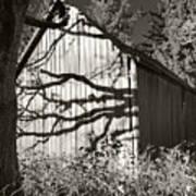 Oak Shadows On A Barn Poster