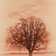 Oak Tree Alone  Poster