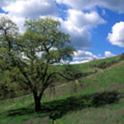 Oak Tree With Clouds Poster
