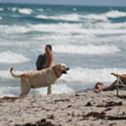 Ocean Dog Poster