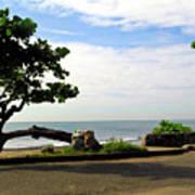 Ocean Formed Tree Poster