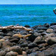 Ocean Watch Poster