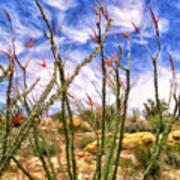 Ocotillos In Bloom Poster