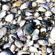 Ocracoke Shells Poster