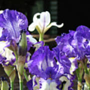 Office Art Prints Iris Flower Botanical Landscape 30 Giclee Prints Baslee Troutman Poster