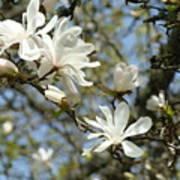 Office Art Prints Magnolia Tree Flowers Landscape 15 Giclee Prints Baslee Troutman Poster