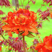 Office Art Prints Orange Azalea Flowers Landscape 13 Giclee Prints Baslee Troutman Poster