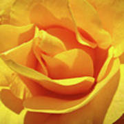 Office Art Prints Roses Orange Yellow Rose Flower 1 Giclee Prints Baslee Troutman Poster