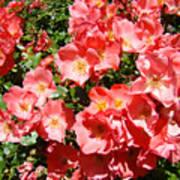 Office Art Rose Garden Landscape Art Pink Roses Giclee Baslee Troutman Poster