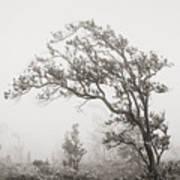 Ohia Lehua Tree Poster