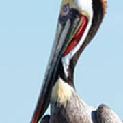 Ol' Blue Eyes Is Back -- Brown Pelican In Port San Luis, California Poster