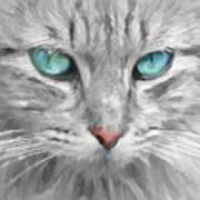 Ol' Blue Eyes Poster
