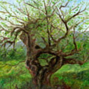 Old Apple Tree Poster